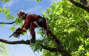 find trusted rated Northumberland tree surgeons