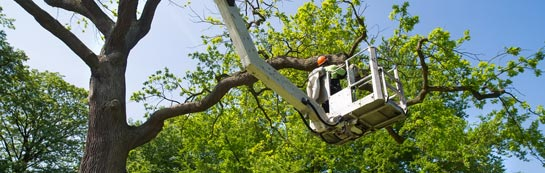 Northumberland tree surgery services