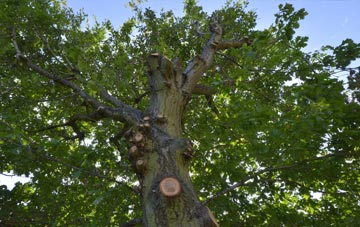 what is Northumberland tree surgery?